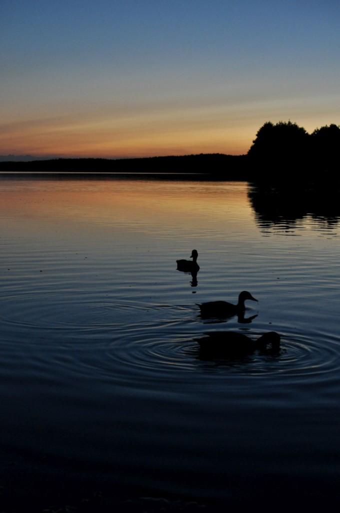 Pożegnanie lata. Kaszuby. Zachód słońca nad jeziorem, po którym pływają kaczki. bebuszka.