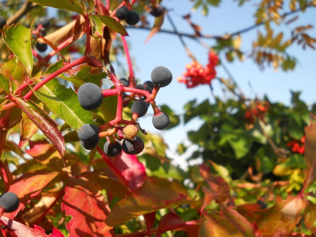 Cedynia jesienią bebuszka slowlife