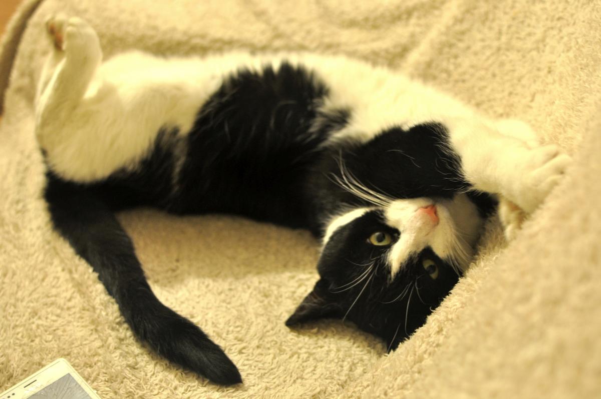 Kot Światowy Dzień Zwierząt bebuszka