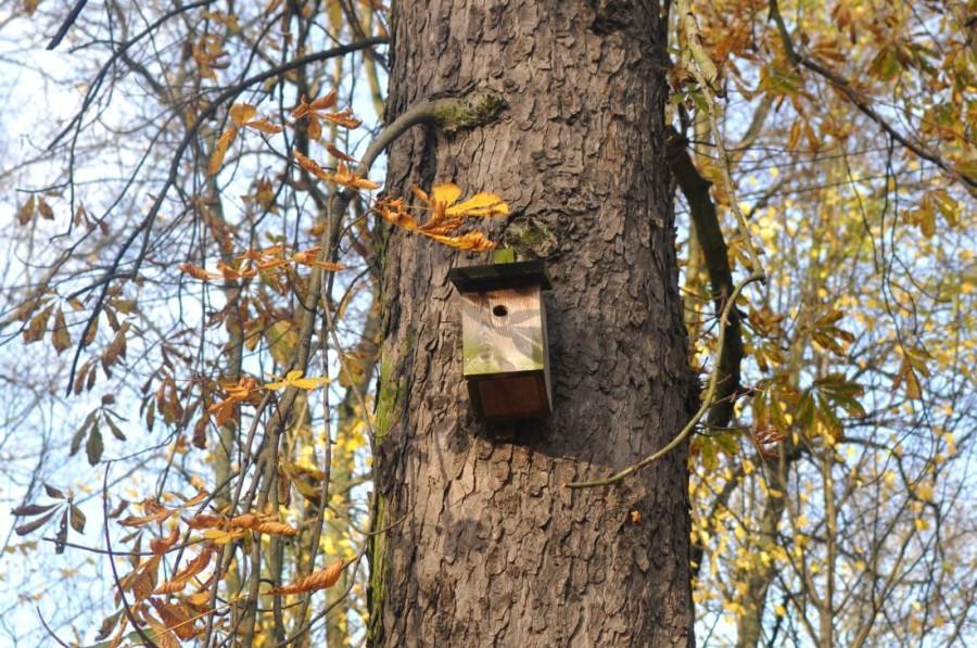 Koszaliński park jesienią. Budki dla ptaków. bebuszka