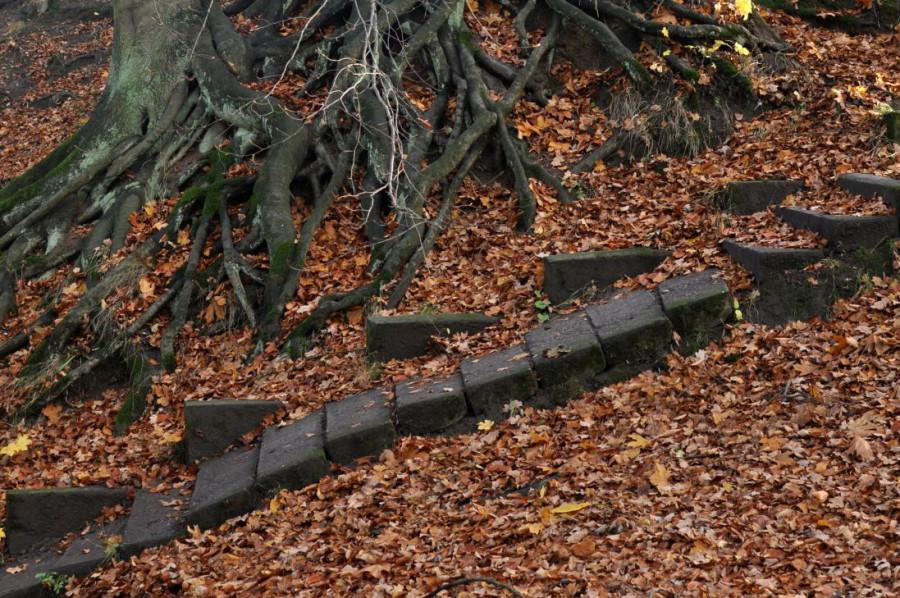 Koszaliński park jesienią. Schody. bebuszka