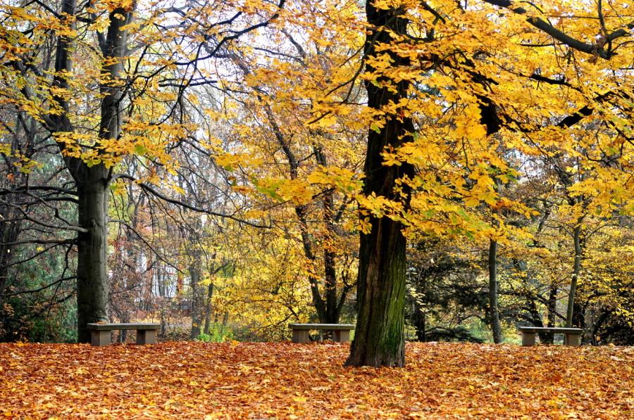 Koszaliński park jesienią. bebuszka