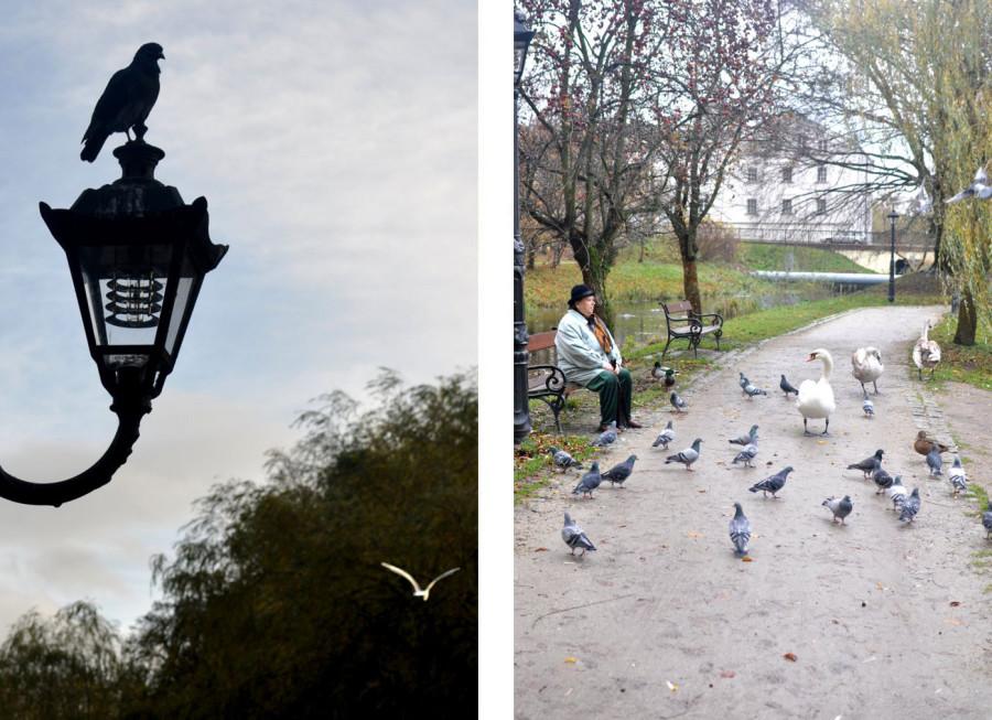 Koszaliński park jesienią. Ptaki. bebuszka.