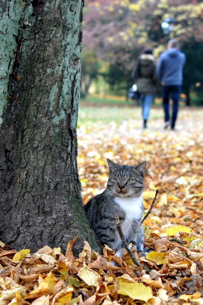 park jesienią. Kot bardzo zadomowiony w parku. bebuszka