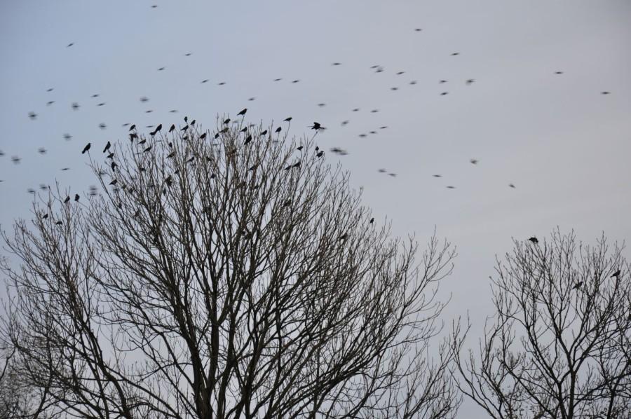 Jesień. Drzewo i ptaki. bebuszka