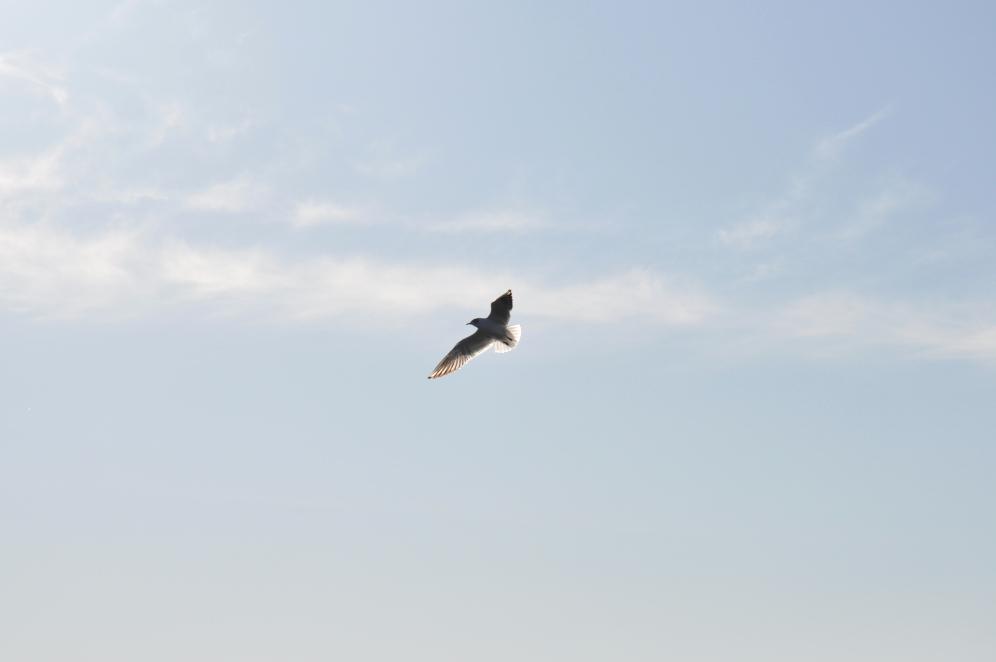 nadzieja ptak refeksje choroba szpital