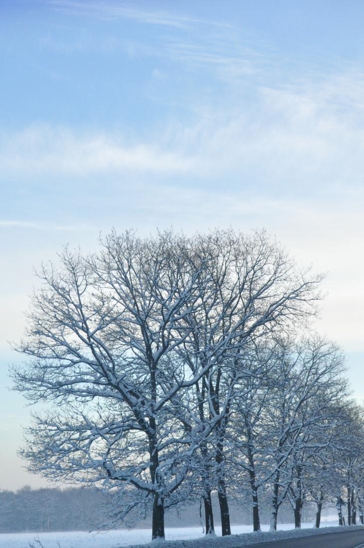 Zimowe drzewa. bebuszka