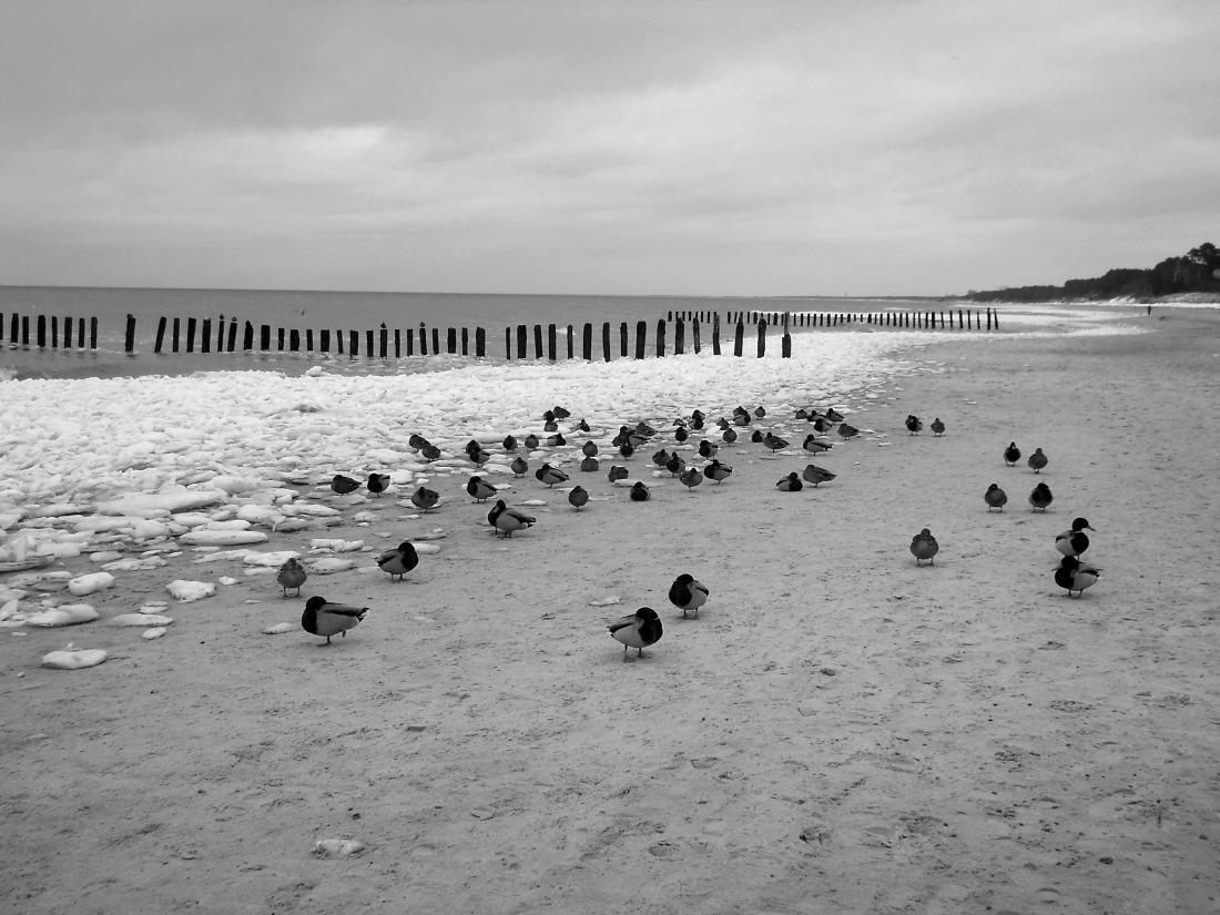 Zimowe morze. Czarno-białe zdjęcia. bebuszka