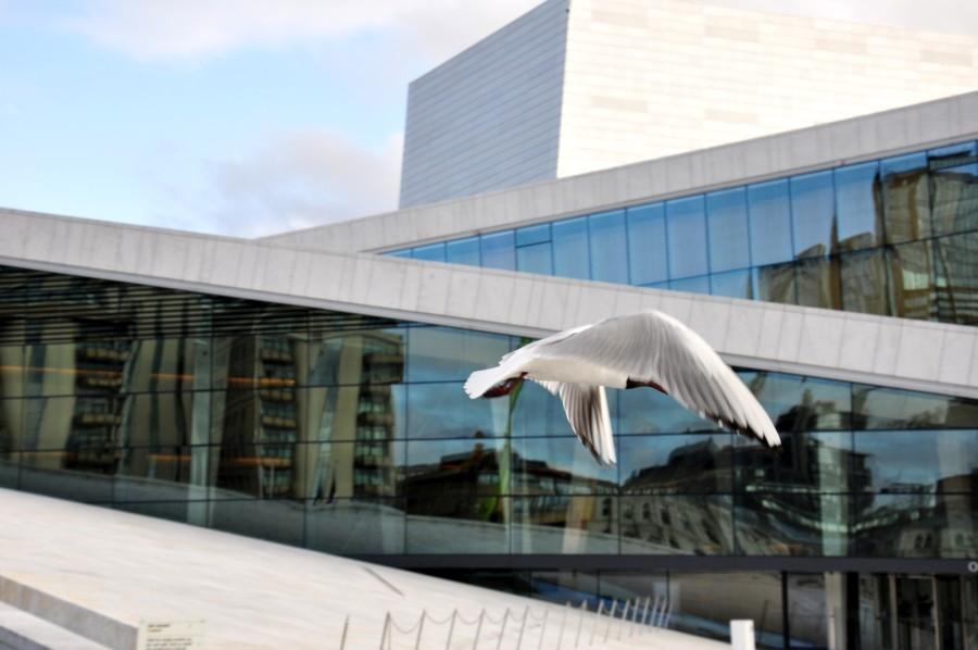 Mewa na tle Opery w Oslo widoki