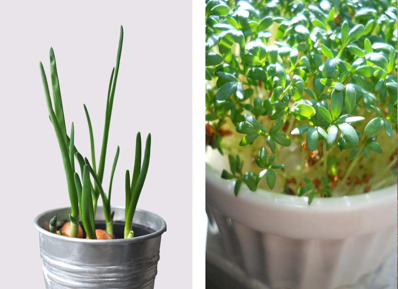ogród na parapecie slowfood zioła