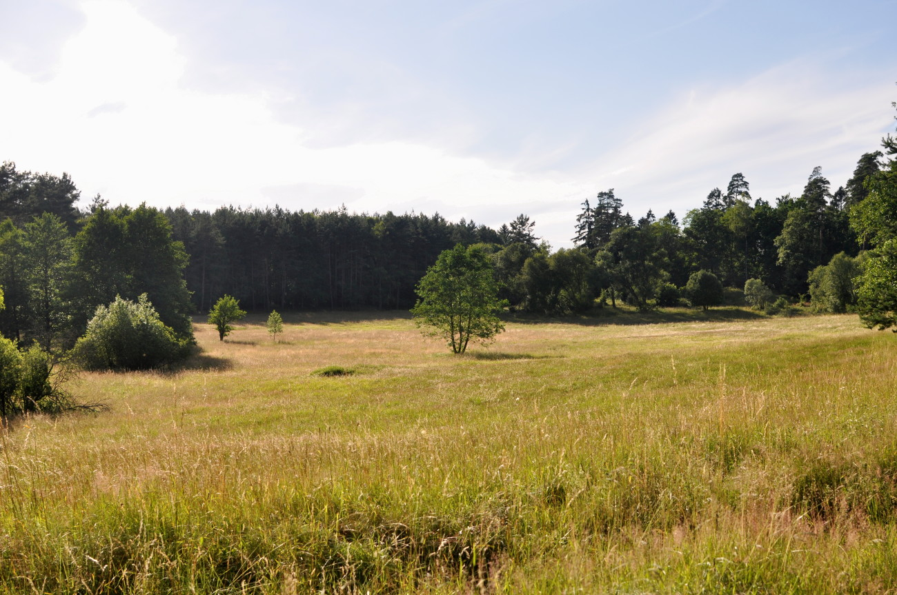 krajobraz łąka bebuszka.pl