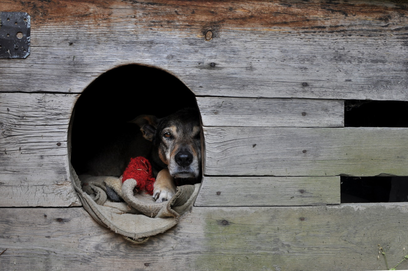 pies, polska wieś, slowlife