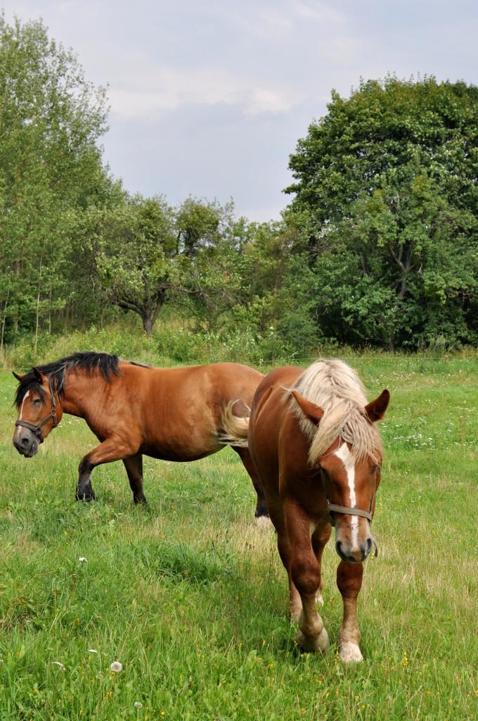 konie bebuszka