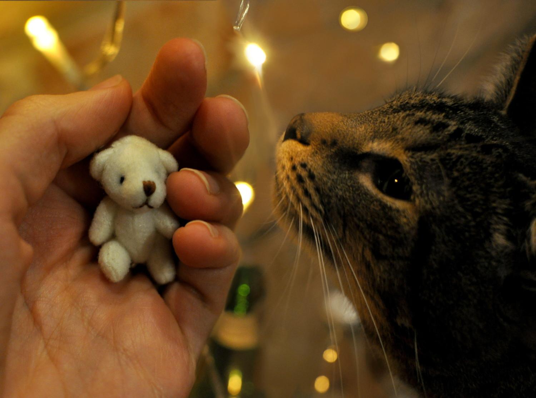 kot i miś, blog, slowlife