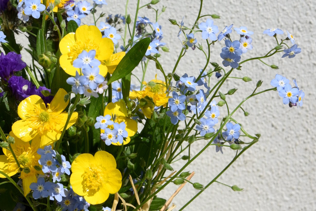 bebuszka, kwiaty łąkowe