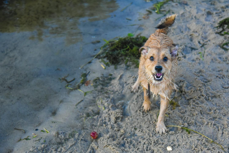 bebuszka lato przyroda pies abi